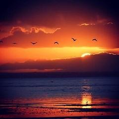 #sunset_nostalgia #Essaouira #Beach #travel #family #holidays #vacation #mountain #people #local #path #animals #model #mode #morocco #africa #europe #america #asia #australia #sudamerica (hamilsaid) Tags: sunsetnostalgia essaouira beach travel family holidays vacation mountain people local path animals model mode morocco africa europe america asia australia sudamerica