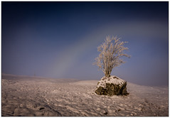 Rannoch Moor Fogbow (muddybootsuk) Tags: rannochmoor scotland snow winter sunshine day landscapetree rock fogbow