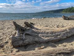 Logs by the shore (Jonne Naarala) Tags: fujifilmx100f x100f usa sea fujix100f log seattle shore