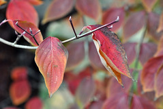 LEAVES 4 (KayLov) Tags: swannanoa scenery asheville grove park inn leaves foliage