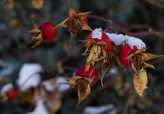 EmilyMunoz_theworldincolour_02 (littleemphoto) Tags: fall2018 idaho rexburg snow