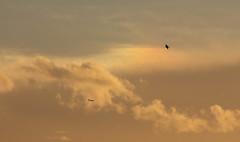 A sunset sundog and plane descending into Heathrow. (Sculptor Lil) Tags: atmosphericoptics sundog weather canon700d london clouds