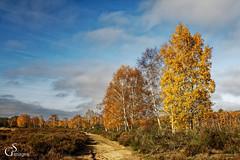Wahner Heide (guentersimages) Tags: landschaft herbst jahreszeiten heide heidelandschaft wahnerheide