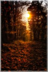 """Stunning Nature"" (Peter Daum 69) Tags: sonnenuntergang sunset licht light farbe color sonne sun natur nature stunningnature sunrise sonnenaufgang landschaft landscape scenery photoart fotografie canon eos wald forest baum weg way"