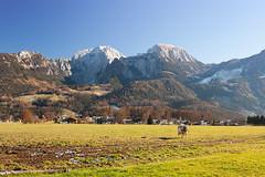 Muh (1,3m), Hohes Brett (2340m) und Hoher Göll (2522m) (Obachi) Tags: berchtesgarden flickr schönauamkönigssee kehlstein hohesbrett hohergöll
