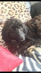 Sat, Nov 10th, 2018 Lost Female Dog - Dunmore Park, Ballymount Dublin 24 (Lost and Found Pets Ireland) Tags: lostdogdunmoreparkdublin lost dog dunmore park dublin november 2018