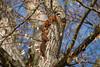 Hoernchen-2018-4054.jpg (Joachim Dobler) Tags: eichhörnchen eichhoernchen squirrel écureuil ardilla scoiattolo esquilo nature natur nagetier maple walnut esquito wildlife animal cute naturephotography squirrellove wildlifephotography bestsquirrel nutsaboutsquirrels cuteanimals