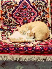 #natgio #mother&doughter (alnafeesi) Tags: mother natgio cateyes catloaf meow kittylove catlovers mypet kittycat kitty cutecat catlover instacat instakitty catofinstagram instacats catoftheday animals instapet catlove kittens cat cutecats instacatmeows cateye
