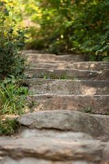 Stairs (Jeremy Caney) Tags: austria centraleurope dürnstein europe ivy path plants rural stairs trail travel wachau wachauvalley niederösterreich