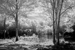 To the Lake (Neal3K) Tags: ir infraredcamera kolarivisionblueirndvifilter henrycountyga georgia cubihatchaoutdooreducationcenter henrycountywaterauthority
