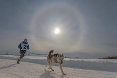 7 (Cyril Doche Photograhie) Tags: animal canada pharélie reportage sundog activitéextérieure canicross chiens compétiteur compétition course extérieur halosolaire hiver neige phénomèneoptique sport sportindividuel
