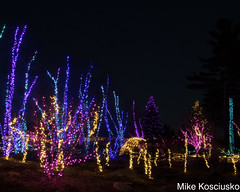 915A6268 (mikekos333) Tags: 2018 december christmas christmaslights coastalmainebotanicalgardens boothbay
