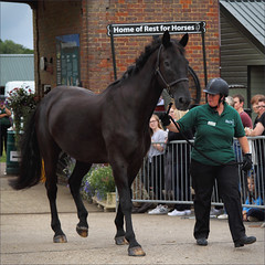Retired I (meniscuslens) Tags: horses hounds heroes event charity horse trust retired military parade groom buckinghamshire aylesbury high wycombe princes risborough