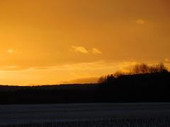 ....wie gemalen... (elisabeth.mcghee) Tags: sonnenuntergang sunset abendhimmel landschaft landscape winter wintersonne winterlandschaft schneelandschaft snow schnee himmel sky clouds wolken orange bäume trees forest wald