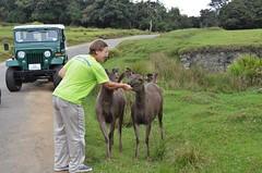 A little treat for Sambar deer. Horton Plains, Sri Lanka. (falcon1801) Tags: horton sambar srilanka