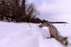 Drifting in (solalta) Tags: tmpg winter branch lakewinnipeg snowing driftwood shore snow nature outdoors