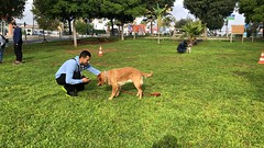 IMG_8605 (Doggy Puppins) Tags: educación canina adiestramiento canino perro dog