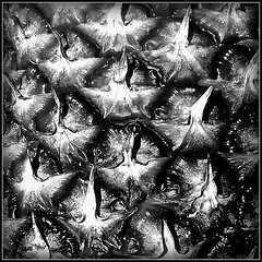 Armour plating? (Jason 87030) Tags: armour plate pattern square mobile phone fruit pineapple composition closeup macro bw bbw skin black blanc noir white blackandwhite prick point prickles prickly case bowl health food shot capture anything everything