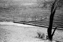 A Very Full Flowing River (Shot by Newman) Tags: ilforddelta400 shotbynewman blackwhite bwfilm coloradoriver tree sand 35mm daylight thesouthwest mojavedesert rails ilfordbwfilm 35mmminolta blackwhitephotograph