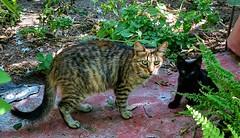 Mamá gata y cachorro. (Pontius Pilatuss) Tags: gatos cat animal animals pet cachorros cachorro mascota nature naturaleza verde green andalucia andalusie
