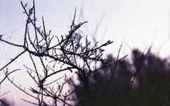 zenit 19-helios 44m2049 (Fabio.Buoso) Tags: mare nebbia alba caorle venezia italia zenit 19 film camera analogic