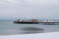 Brighton Starlings on a Snowy Morning (lomokev) Tags: brighton england unitedkingdom gb file:name=1802275dmrk34091 snow starling starlings murmuration pier brightonpier palacepier winter morning canoneos5d canon eos 5d beach sea ocean