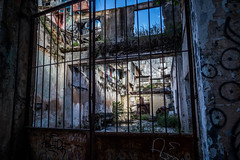 overgrown (aprilpix) Tags: architecture building cityscape cuba cubaroadtrip havana oldtown streetscene urban