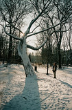 boy you know how to make a girl cry (Lentejas Puag) Tags: 35mm film filmisnotdead fujifilm snow winter krakow poland tree shadow lens camera analoguevibes analog photography europe