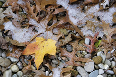 Dreary With Color (Modkuse) Tags: provia fujifilmxt2provia fujifilmxt2proviasimulation nature natural leaf leaves snow art artphotography fineartphotography fineart photoart photoflat fujifilm fujifilmxt2 xt2 xf35mmf2rwr fujinon fujinonxf35mmf2rwr rocks