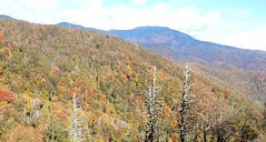 Mountains, from Blue Ridge Parkway, with three old dead trees (Martin LaBar) Tags: northcarolina blueridgeparkway trees herbst autumn mountains landscape