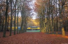 20181115 NSR 1755+7211 in het bos, Heiloo (Bert Hollander) Tags: heiloo hlo nsr loc 1755 eloc locomotief serie 1700 geel ddm1 7211 oude dubbeldekker spitstrein bos bladeren autumn ns trein 3437amrhlm