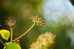 Wasp 🐝 (german261093) Tags: wasp avispa naturaleza nature green verde amarillo yellow balck negro nikon d3000 plantas plants