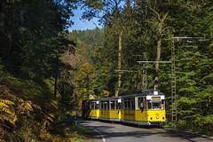 Es herbstelt im Kirnitzschtal (Michael Sperl) Tags: tram strasenbahn gothawagen kirnitzschtal kirnitzschtalbahn überlandbahn wald