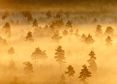 Misty Trees in the Morning (Digikuvaaja) Tags: finland nordiccountries background beautiful calm countryside dawn early fog foggy forest landscape light marsh mist misty morning nature nobody orange peaceful scenery scenic season silhouette summer sunlight sunrise swamp tranquil trees water wetland wilderness tammela tavastiaproper fi
