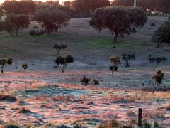 a cool morning (lualba) Tags: morgensonne morningsun raureif ice trees bäume gras landschaft landscape alentejo portugal