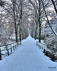 Chemin en hiver (DOMVILL) Tags: arbre chemin domvill france neige nord pont wwwflickrcompeoplevildom