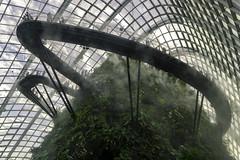 Singapore_Gardens (cobblepot) Tags: singapore gardens by bay cloud forest supertree grove marina sands night lights walkway bridge waterfall