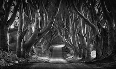 The Dark Hedges (ANG Imagery) Tags: trees tunnel road blackandwhite monochrome darkhedges
