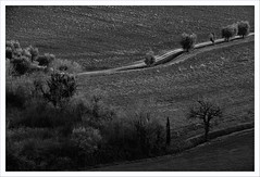 Senza titolo 152 (Outlaw Pete 65) Tags: paesaggi landscapes campi fields alberi trees strada road natura nature biancoenero blackandwhite fujixe3 fujinon55200mm manerba lombardia italia