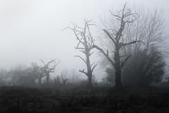 ... (a.penny) Tags: trees tree baume nebel fog fuji finepix x10 apenny