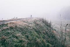 """""""Viene gennaio silenzioso e lieve.."""" (Roberto Spagnoli) Tags: mist fog tinyman dog color fotografiadistrada streetphotography frost colore grass winter cold paesaggio landscape nebbia valpadana"""