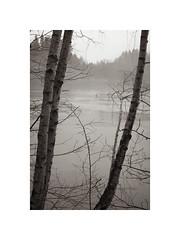 NG XXXV ([ Time - Beacon ]) Tags: trees trunks treetrunks twigs branches winter landscape lake monochrome monochromatic bark