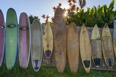 Sunny Surfboards 2 (Edmonton Ken) Tags: surfboard fence sun star flare pink green yellow starburst sunrise hawaii maui travel attraction jaws cafe tourism
