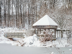 Brookside Gardens after January 13th Snowfall (Montgomery Parks, MNCPPC) Tags: brookside brooksidegardens gardens ice maryland mncppc montgomeryparks nature park rosegarden snow winter