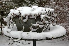 WINTER IN EEN TEILTJE || WINTER IN A BOWL (Anne-Miek Bibbe) Tags: snow sneeuw winter canoneos700d canoneosrebelt5idslr annemiekbibbe bibbe nederland 2019 wit white blanc weiss bianco blanco branco tuin garden jardin giardino jardim natuur nature teil zink zinkenteil bowl geranium januari || januar enero gennaio january janeirode