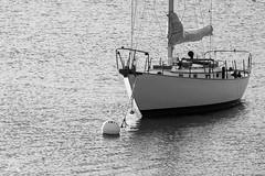 On the Mooring -5073Green Island-4933 (NWPaddler) Tags: 2018 blackwhite boothbayharbor coast harbor me maine mainecoast nikon september summer vacation boat sailboat mooring