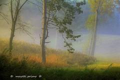 Le Lame di Zocca (Modena Modena Italy) _3540_ dvd 22 (masotti primo) Tags: samone appenninomodenese masottiprimo missions fognebbia autunno autumn landscapes trees alberi forest castagno zocca modena italy montalbano missano montecorone guiglia montombraro rosola