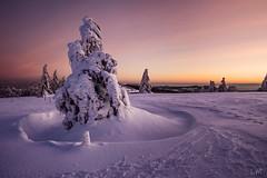Posé (Manonlemagnion) Tags: sapin arbre paysage neige hiver nature froid vosges sunrise leverdusoleil montagne hohneck troisfours lumière nikond810 1635mmf4