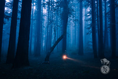 Walking in the forest (Storm'sEndPhoto) Tags: california eastbay oakland redwoods joaqinmiller dark mood moody blue flashlight torch fog mist trees silhouette