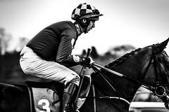 DSC_0006 (1) (fullerton42) Tags: straftford racecourse stratfordracecourse horse horses racehorse horseracing race punter punters specatators sport equine england